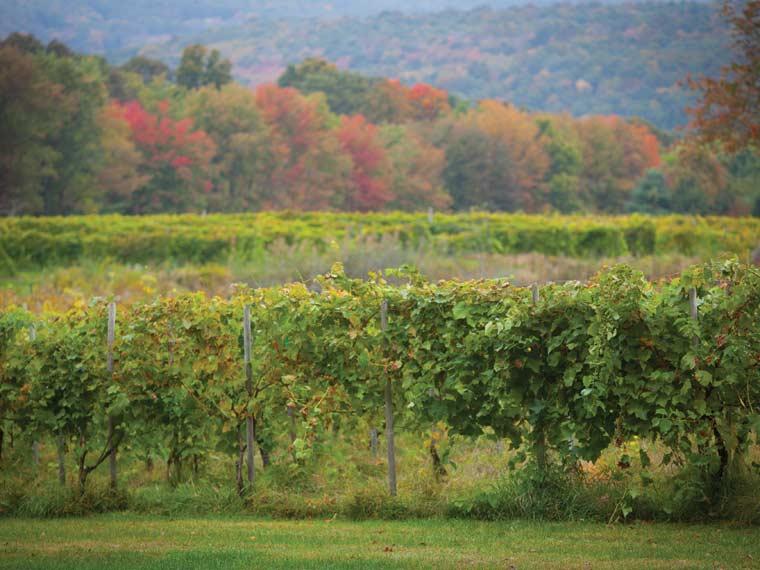 Photo of Priam Vineyards