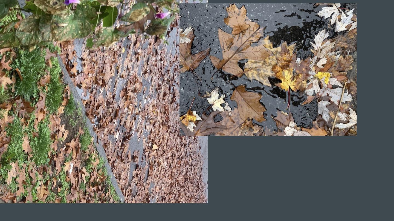 leaves-slide.jpg